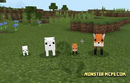 Cuter Vanilla Foxes (2)