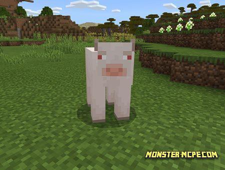 White albino